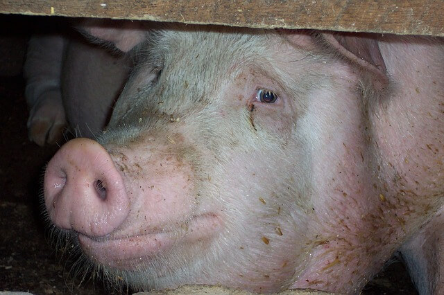 hypocrisy on animal farm Animals are not ours to exploit, abuse, or kill, peta says yet every year peta's members intentionally kill animals by the thousands if that's not hypocrisy i don't .