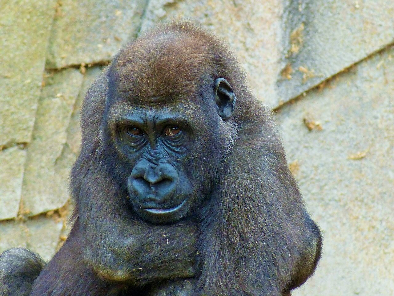 zoos prison or sanctuaries Zoos- prisons or sanctuaries for animals thr posts: 9,808 forum member 10/04/10 - 00:05 in general discussion #1 what are your views on zoos.