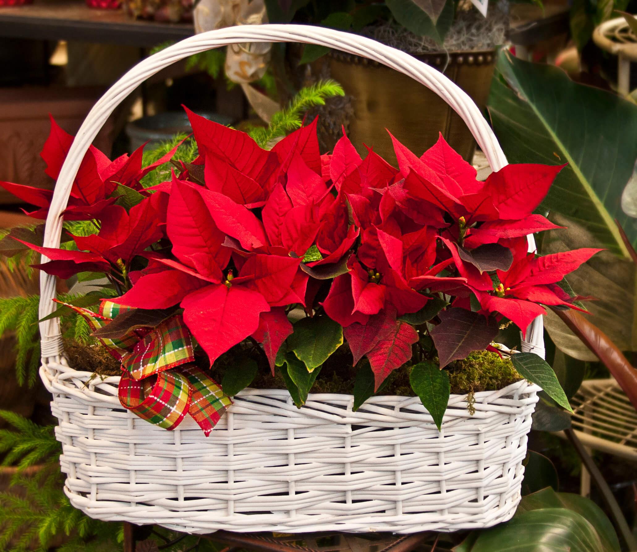 Vegan Holiday Gift Baskets: Win a Harry & David Gift Card