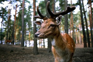 Hunting Season: Why You Shouldn't Support It