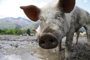 Jon Stewart: TV News Anchor to Local Animal Hero