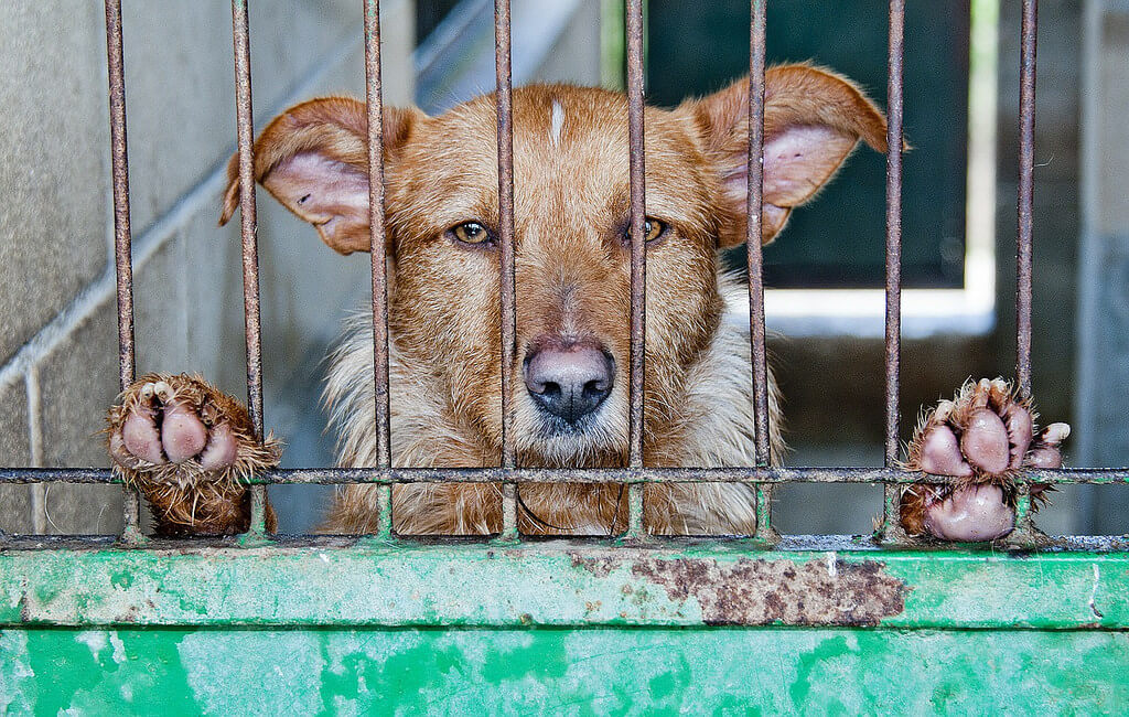 China's Dog Meat Festival: Another Year, Another Stand