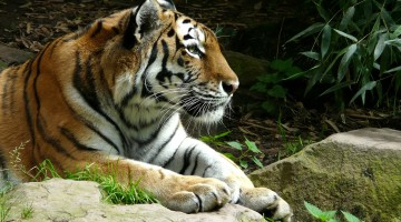 Are Zoos Good: The Ethics of Captivity