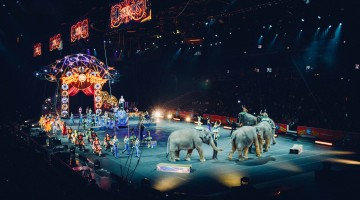 Not Fun for Everyone: Circus Elephants