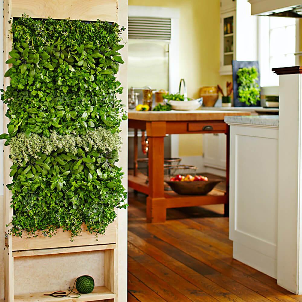 Вертикальное озеленение стен или сад нового поколения.