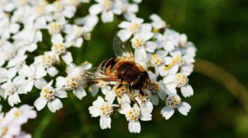 Is Honey Vegan? Not If Exploitation Is Involved!