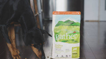 Vegan Dog Food For The Win: Petcurean's Gather