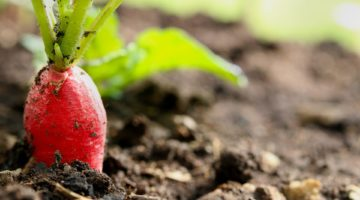 8 Easy Low Maintenance Vegetables to Grow in Your Garden