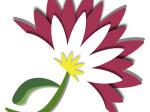 mimosa creations