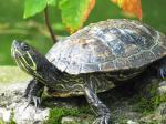 Buy the Teenage Mutant Ninja Turtle Toys, Not the Turtles